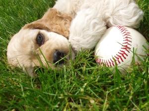 bigstock-ACS-Baseball-581419
