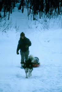 Old Trapper found a new lease on life when we started using him to haul firewood in a little red plastic sled. He cheerfully hauls Julie's load home for her. Photo by Miki Collins 1983.