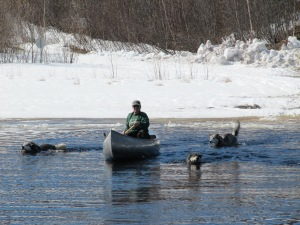 Miki paddling the canoe across the wide lead between the shore and the solid pack ice. She would have give the dogs a ride, but they all opted to swim.