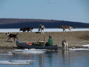 After swimming on ahead, Meeter, Keta, Jiles, Pebbles and Clarence wait for Miki as she paddled the canoe and dog sled ashore from the pack ice on the way home.
