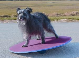 agility wobbleboard