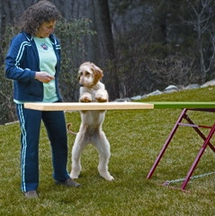 Introducing a dog to seesaw - photograph by Bohm Marrazzo Photography