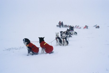 Both dogs and drivers must be prepared for all types of weather. Here two teams take a break during a blizzard.