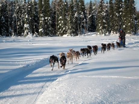 Egil Ellis on a training run in Willow, Alaska. Photo by Helen Lundberg.