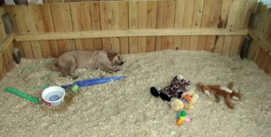 A safely enclosed play area and puppies toys should be available to puppies.