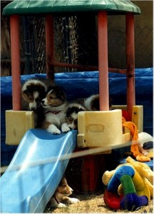 Kids playground equipment makes a great play area for puppies.
