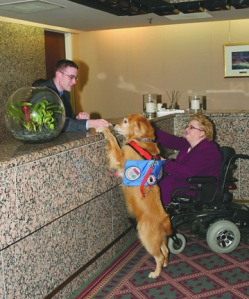 service dog in hotel