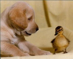 4.Ducky