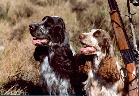 Spaniels w/gun. James Spencer Photo