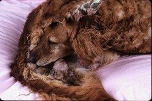 birth of puppy