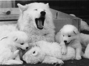 6.8 YAWN WITH PUPS