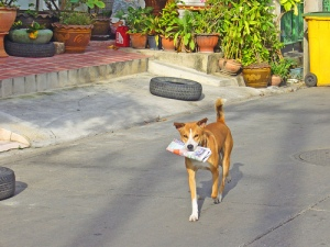 photo credit: Dog with a job in Ratchada Soi 10, Bangkok via photopin (license)